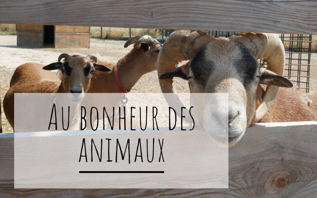 Sortie avec les enfants dans la Drôme : ferme pédagogique au bonheur des animaux