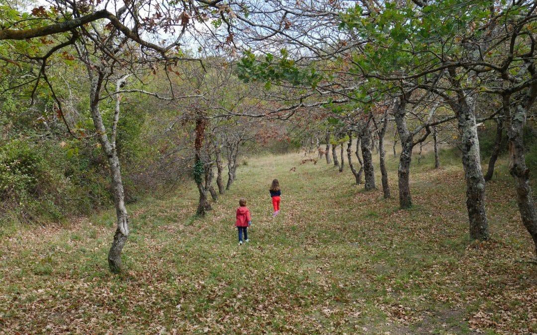 Idées balade avec les enfants dans la Drôme, autour de Montélimar
