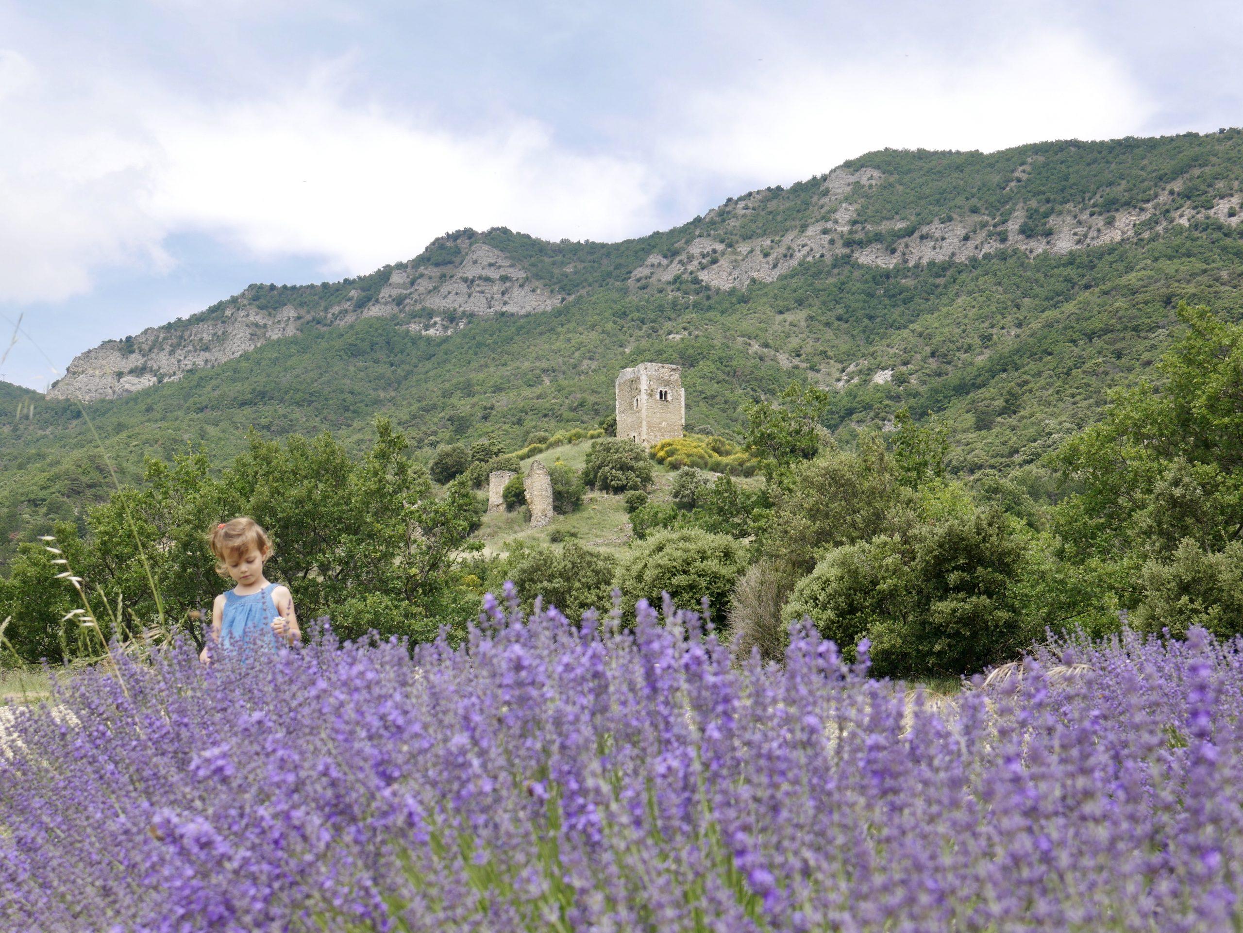 Lavande Drôme autour de Dieulefit