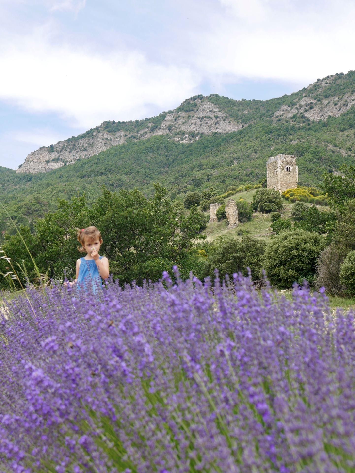 lavande drome autour de Dieulefit, Roche-Saint-Secret-Béconne