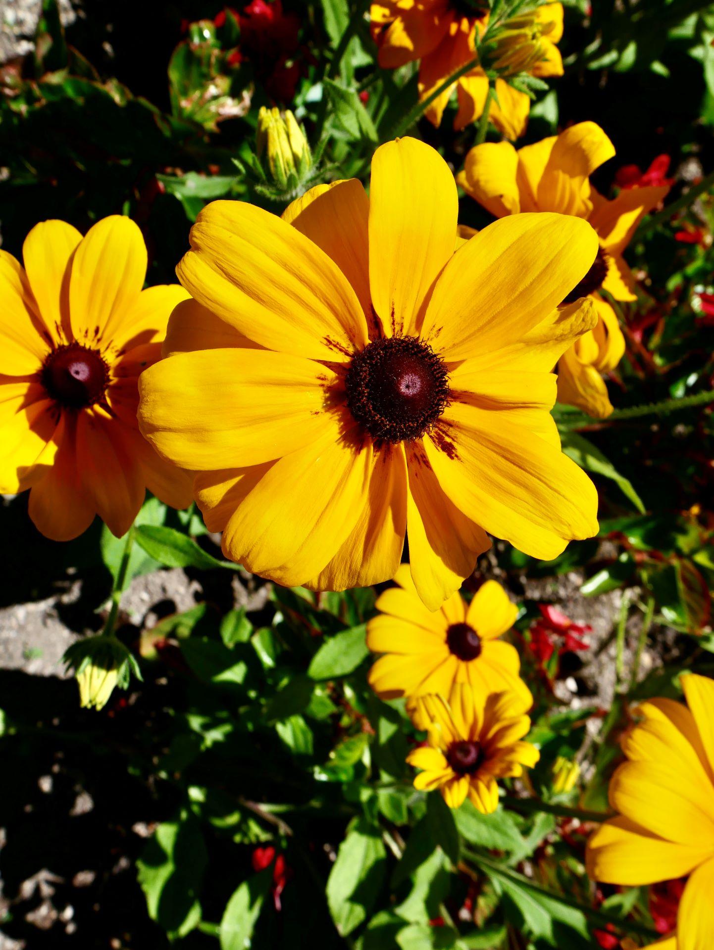 La garde Adhémar : fleur du jardin des herbes
